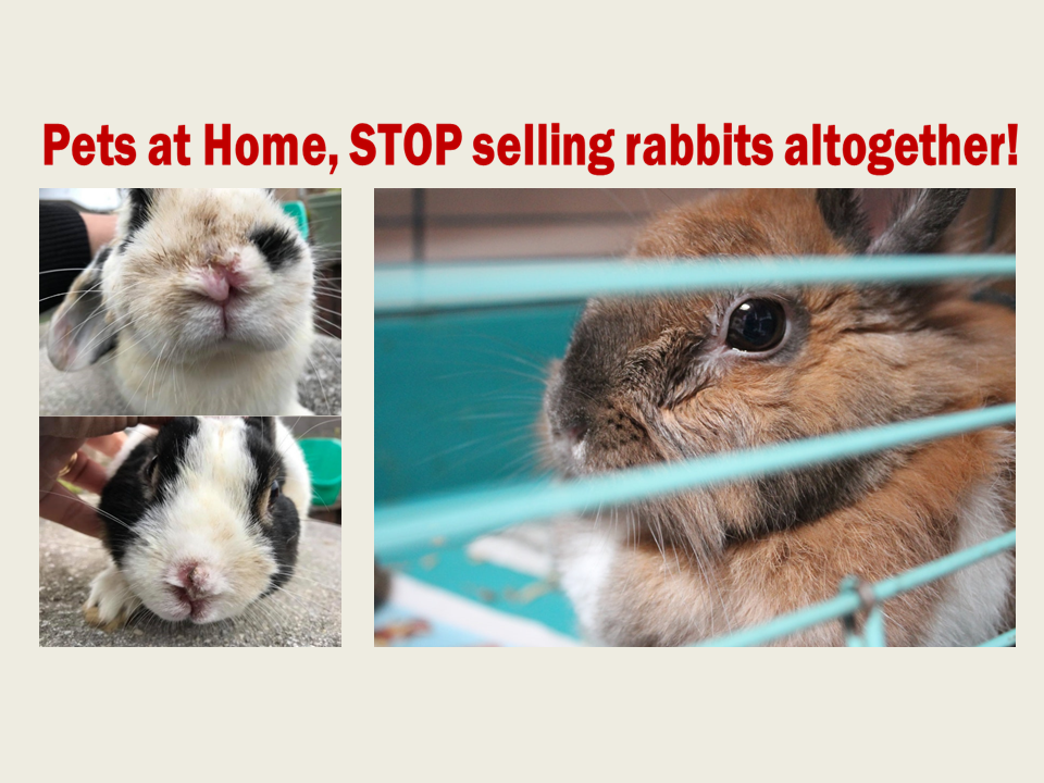 PaH Stop Selling Rabbit Petition Main.png