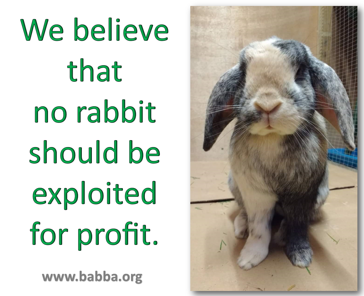 We believe that no rabbit should be exploited for profit
