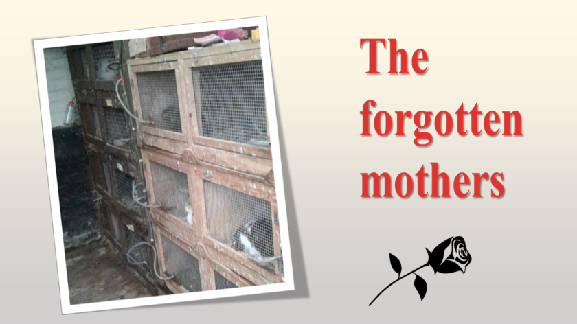 The Forgotten Mothers Cover Picture.png